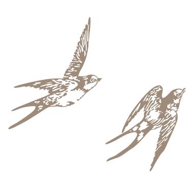 oiseaux hirondelles en vol