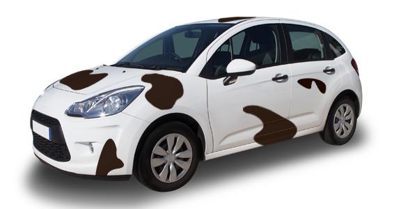 sticker Bovin auto